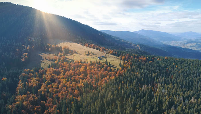 Aerial View over beautiful autumn mountain landscape. Yellow pasture with lonley houses among orange pine tree forest. Mountain range in the background. Holidays, travel. Carpathians, Ukraine, Europe